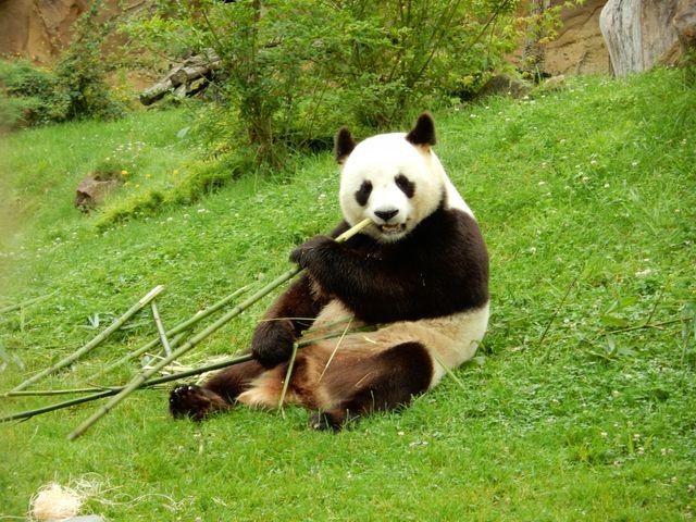 La WWF s'alarme de la disparition de la moitié des animaux sauvages