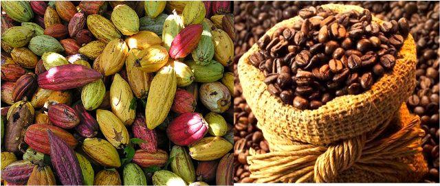 Café-Cacao