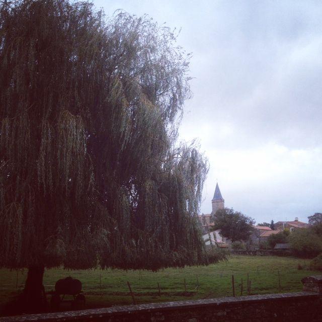 St Juire et son arbre, 20 ans plus tard.