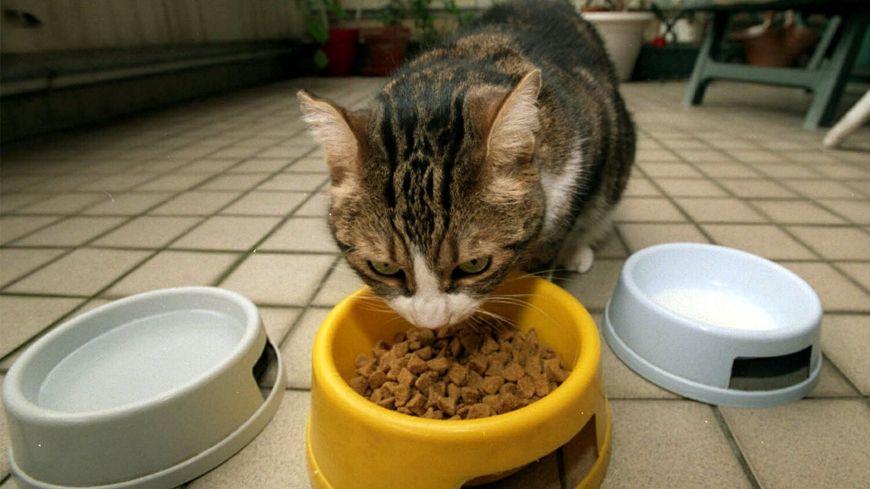 Le fabricant de croquettes pour chiens et chats, ATM à Sens, est en redressement judiciaire