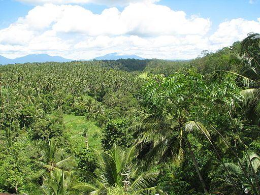 Forêt tropicale (île de Bali, Indonésie)