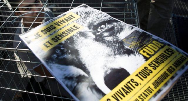 Appel à un rassemblement du collectif FUDA pour une evolution du statut juridique de l'animal.