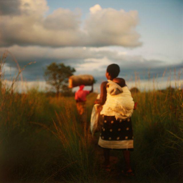 Dans une praire, en Afrique, Harare, Zimbabwe