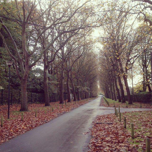 Derrière les arbres du quartier Beaumont, les grandes fortunes, discrètes