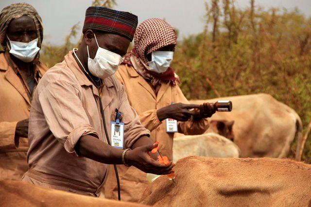 Traitement du bétail en Éthiopie.