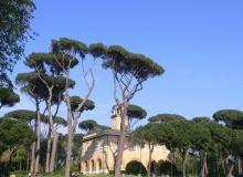 Pins de Rome