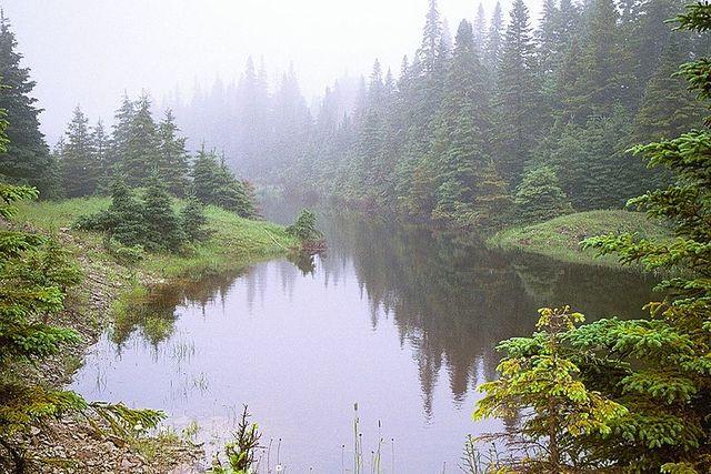 Un étang de castor. Ile d'Anticosti - Québec - Canada