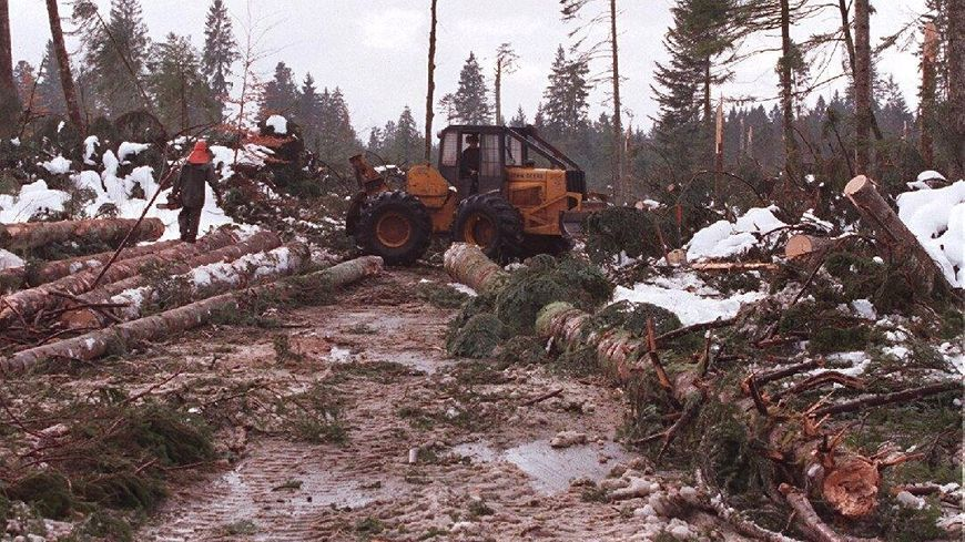Tempête 1999 les dégâts en forêt de Frasne
