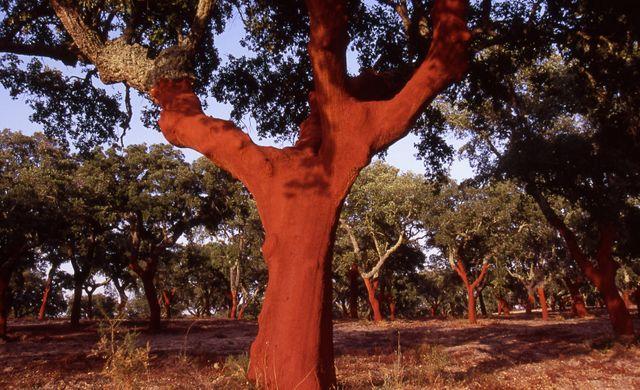 Forêt de liège