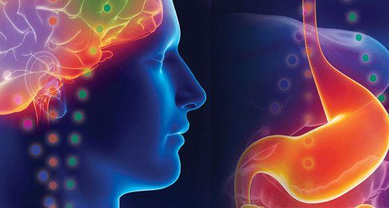 Interaction ventre et cerveau
