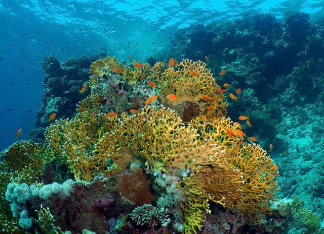 Récif coralien, Egypte.