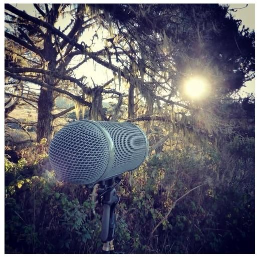 Field-recording