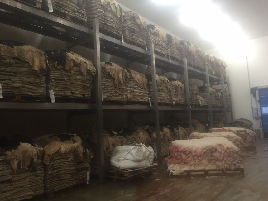 Les peaux stockées dans le nouvel entrepôt réfrigéré à la SOBEVAL