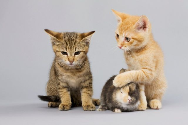 Chats et lapins