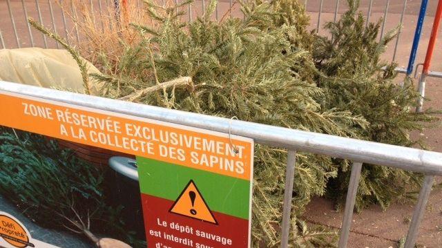Collecte des sapins de Noël à Toulouse.