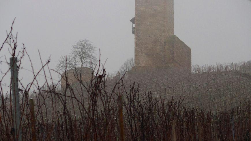 Le Wineck, dans les vignes de Katzentahl.jpg