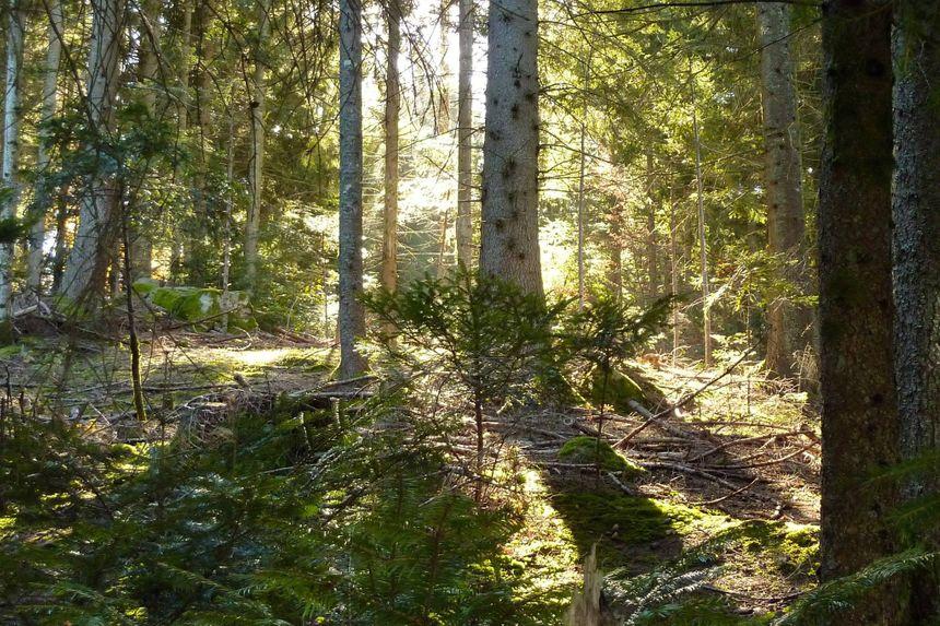Un sous bois et ses plantes sauvages dans la forêt de Chamrousse en Isère, octobre 2013