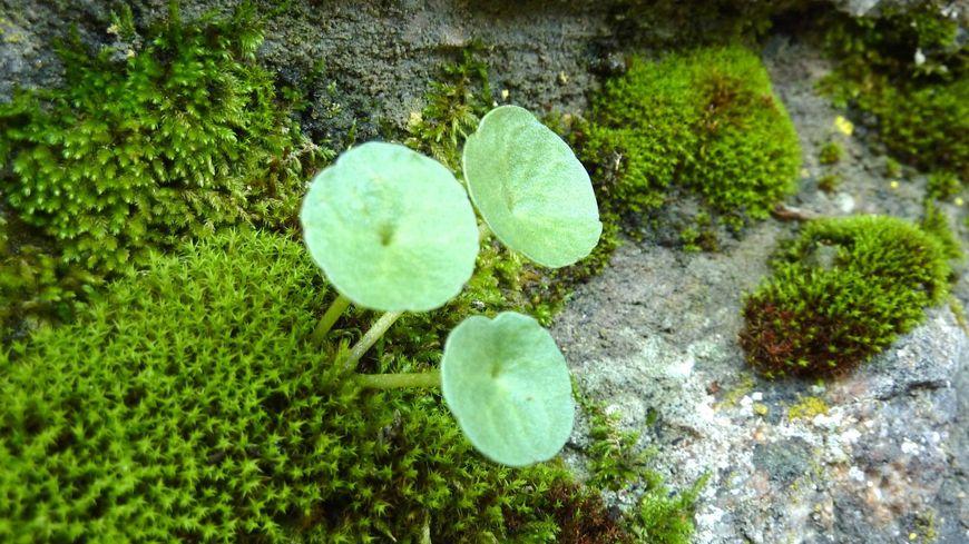 Des plantes sauvages à Thorenc en Ardèche, octobre 2014