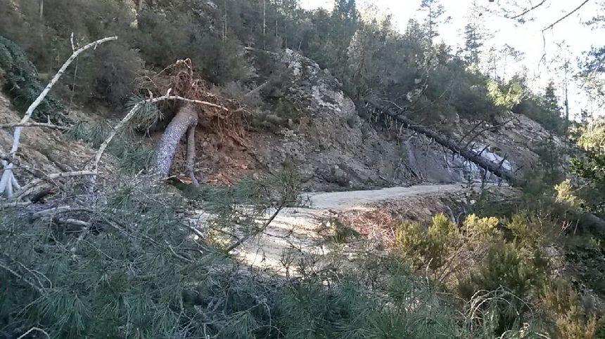 Plusieurs hectares de forêt détruits par le vent à Guagno