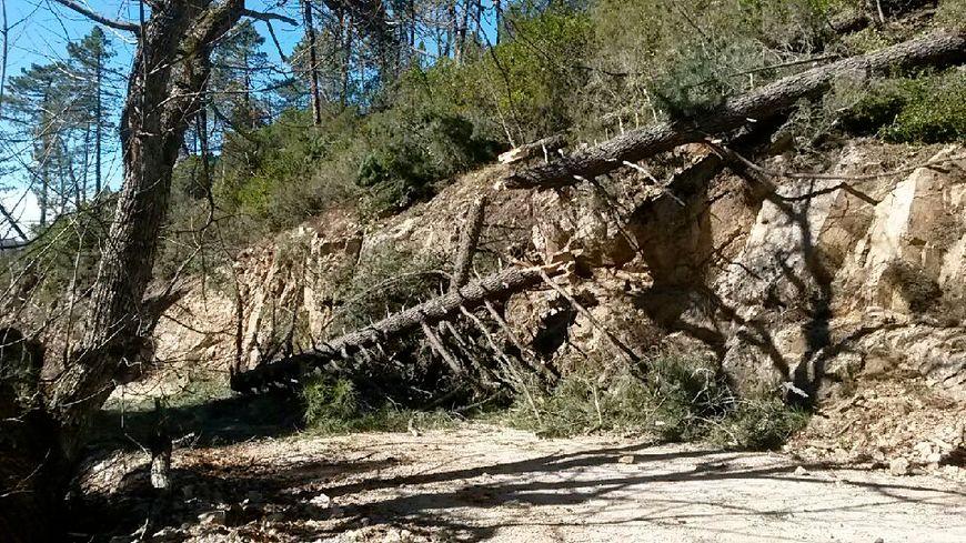 La forêt de Guagno dévastée par la tempête de vent