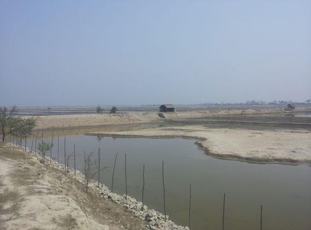 Gabura, île du sud du Bangladesh, infiltrée par le sel. Plus rien ou presque n'y pousse, même les arbres y meurent