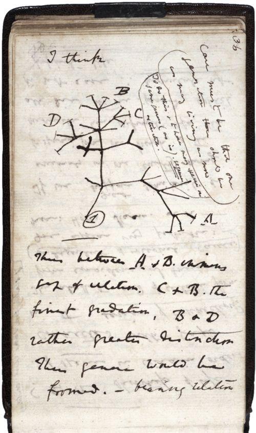 la première esquisse de la théorie de l'évolution par Charles Drawin en 1837