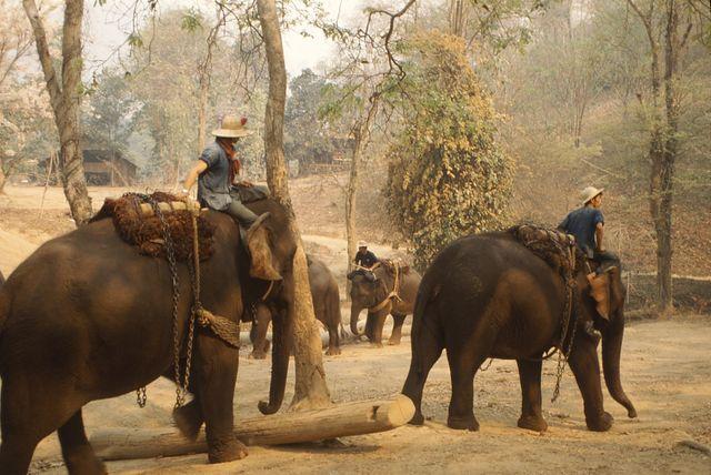 Camp d'entrainement d'éléphants en Thaïlande (1992)