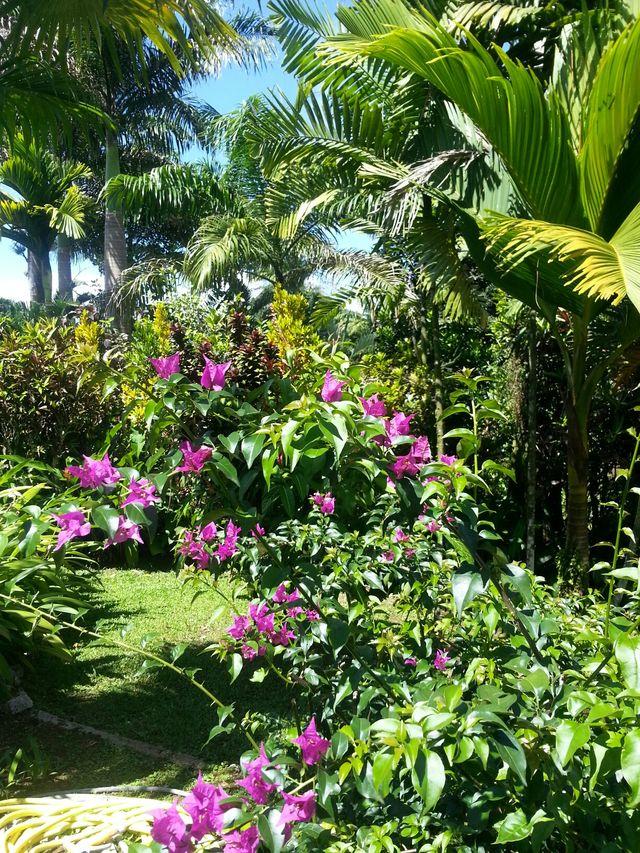 Arbres de Guadeloupe