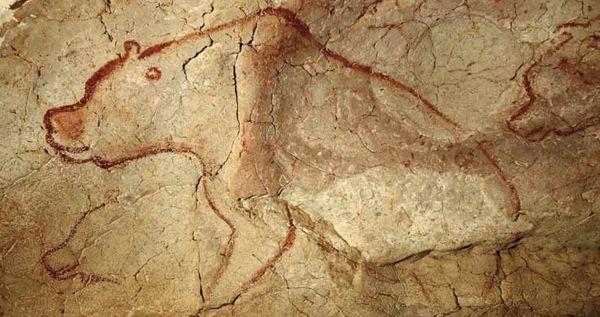 Ours dans la réplique de la Grotte Chauvet