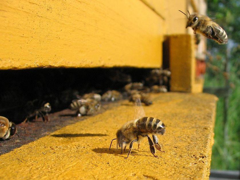entrée d'une ruche