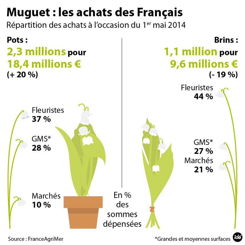 Infographie sur le muguet