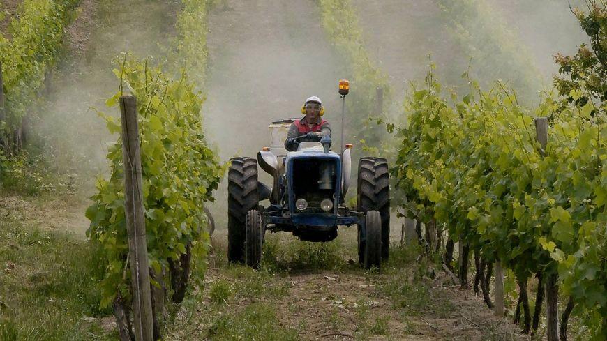 Peut-on imposer les pesticides dans les vignes ?