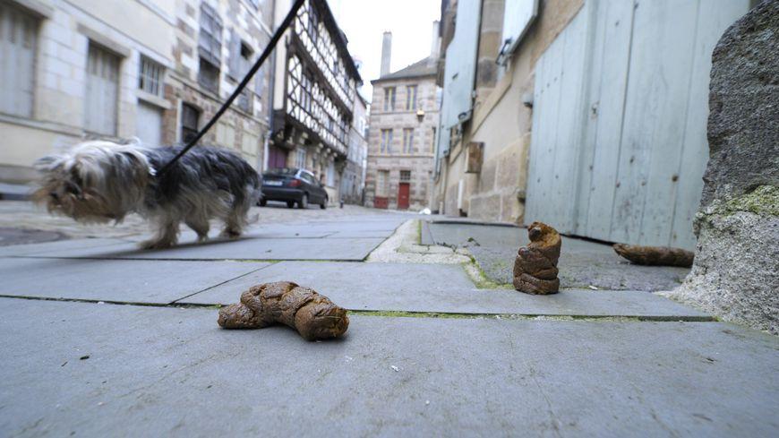 Crottes de chiens (photo d'illustration).