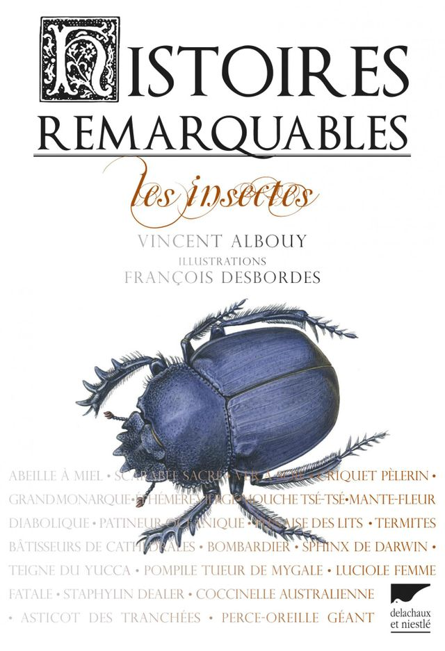Histoires remarquables : les insectes