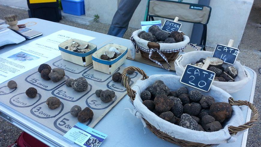 """La truffe d'été, """"tuber aestivum"""", est aussi appelée """"truffe blanche"""", car elle est plus claire à l'intérieur que la truffe noir"""
