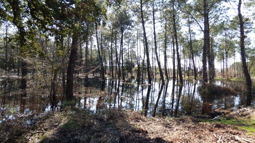 Marais du lac noir à Ondres