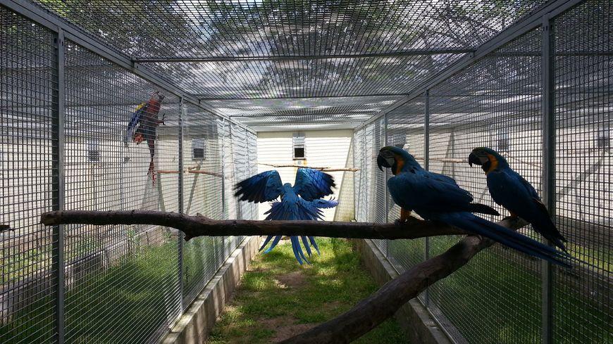 Ces aras font partie des oiseaux à adopter à Pouydesseaux
