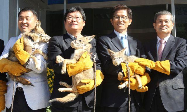Corée du Sud, 2011 - Le scientifique Hwang Woo-suk et ses collègues, de la fondation Sooam spécialisée dans le clonage de chiens