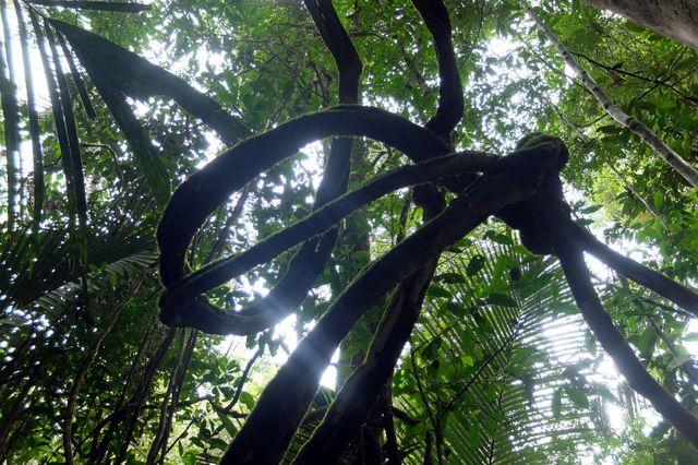 Forêt tropicale humide de la Guyane