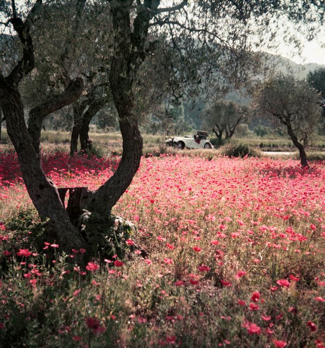Florette dans la Morgan. Provence, mai 1954 ATTENTION QUE POUR EXPOSITION a la MEP