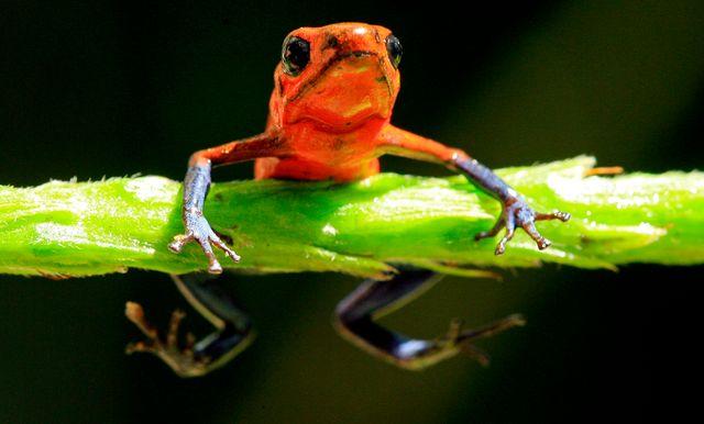 Comment sauver la biodiversité