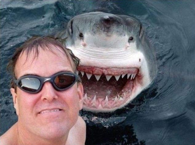 Photomontage réalisé à partir d'une photo de requin