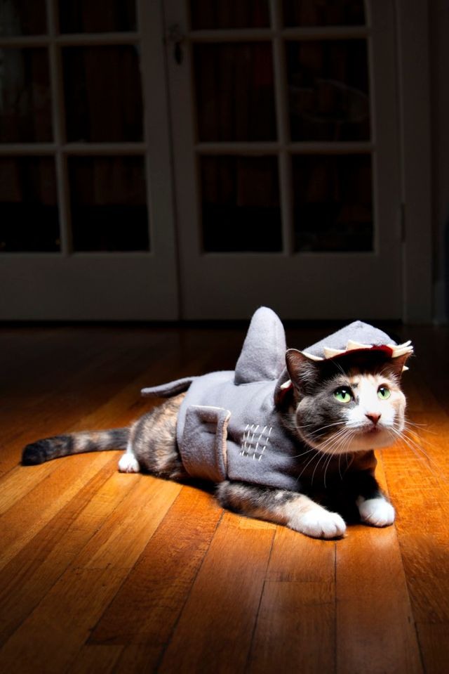 Chat - Requin
