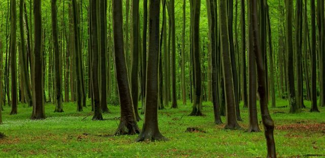 Ilustration forêt