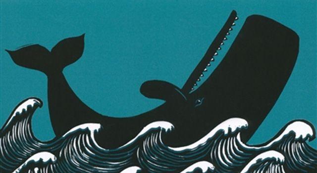 La baleine dans tout ces états