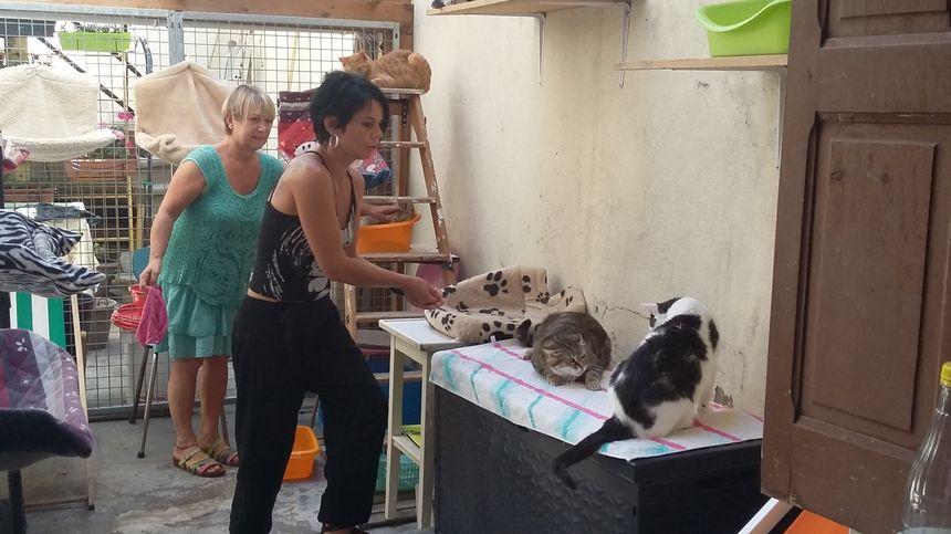 Une dizaine de bénévoles viennent chaque jour à tour de rôle pour s'occuper des chats du refuge.