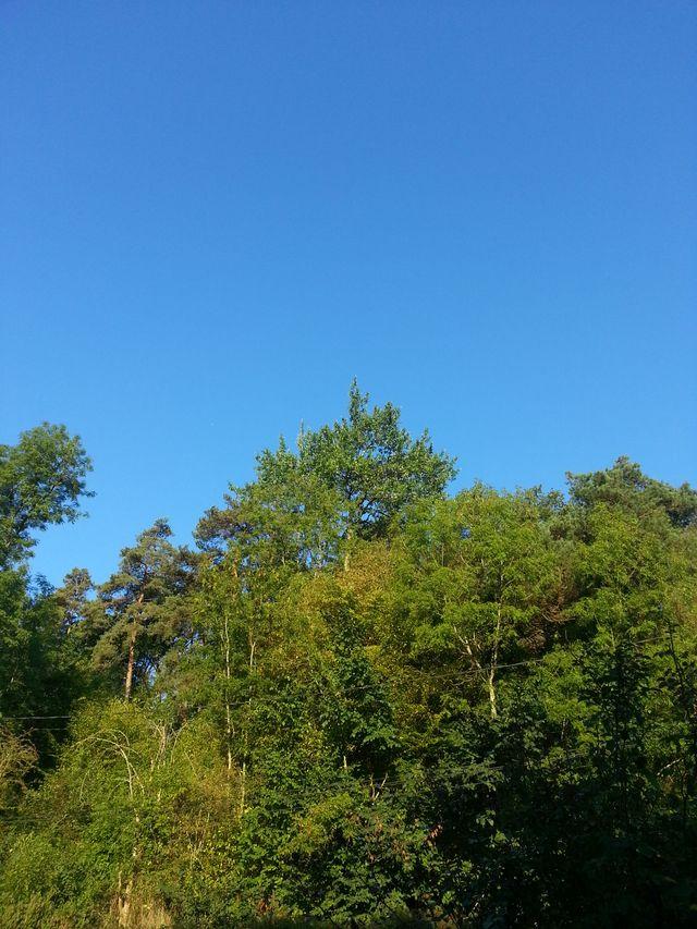 Forêt en Essonne