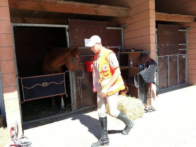 A l'écurie, les chevaux de la Croix Rouge