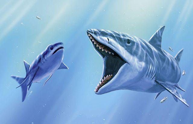 requin ancien