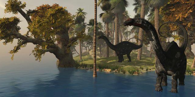 Deux Apatosaurus